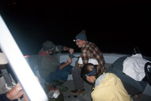Maine Audubon Banding Loon on Watchic Lake. 2014