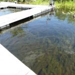 Invasive Milfoil Found on Long Lake Maine