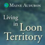Living with Loons… Back after Ice-out